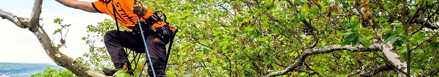 TreeClimbing Corde